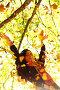 Девушка в ярком осеннем парке, фото № 3725084, снято 6 октября 2010 г. (c) Иван Михайлов / Фотобанк Лори