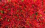 Lots of red peppers arranged at the market, фото № 6420036, снято 20 ноября 2013 г. (c) Elnur / Фотобанк Лори