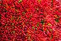 Lots of red peppers arranged at the market, фото № 6453140, снято 20 ноября 2013 г. (c) Elnur / Фотобанк Лори