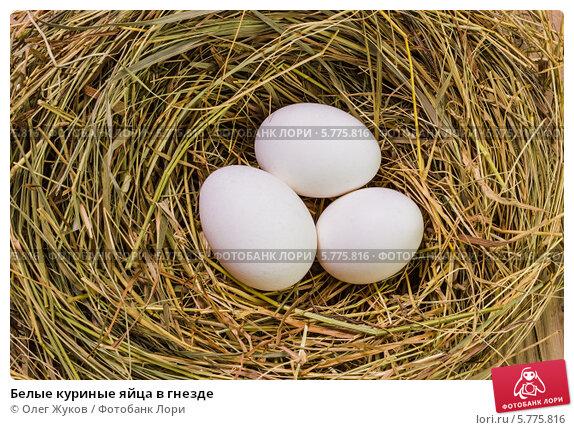 Что делать с яйцами в курице