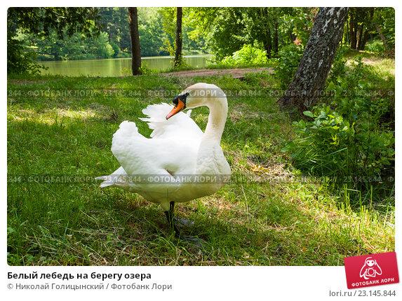 Скачать песню агафонов лебеди