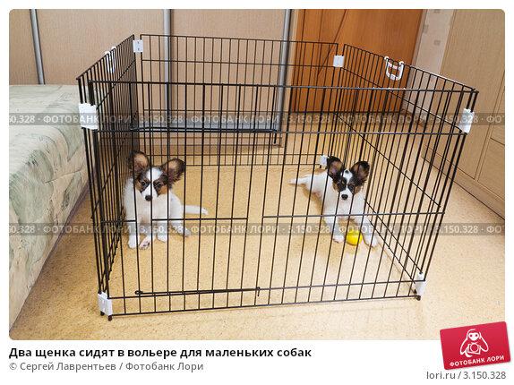 Два щенка сидят в вольере для маленьких собак; фото 3150328, фотограф Сергей Лаврентьев. Фотобанк Лори - Продажа фотографий, илл