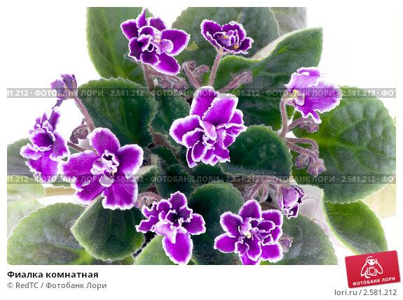 Комнатные цветы фото и каталог