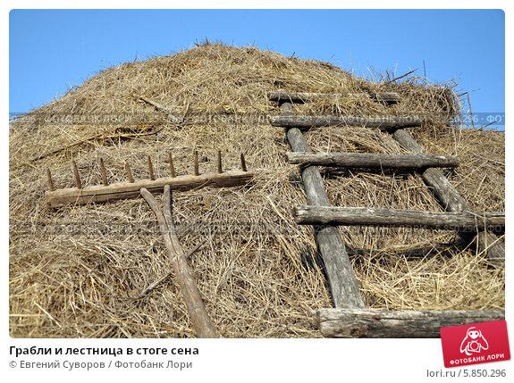 Грабли деревянные для сена