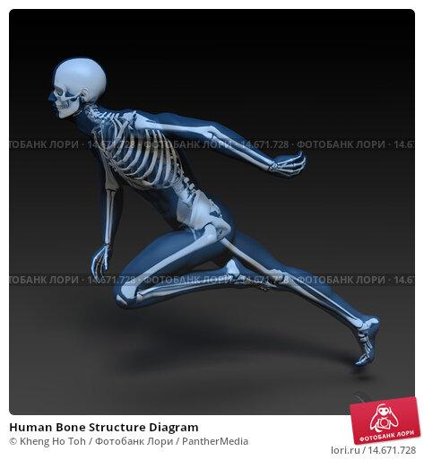 Human bone structure
