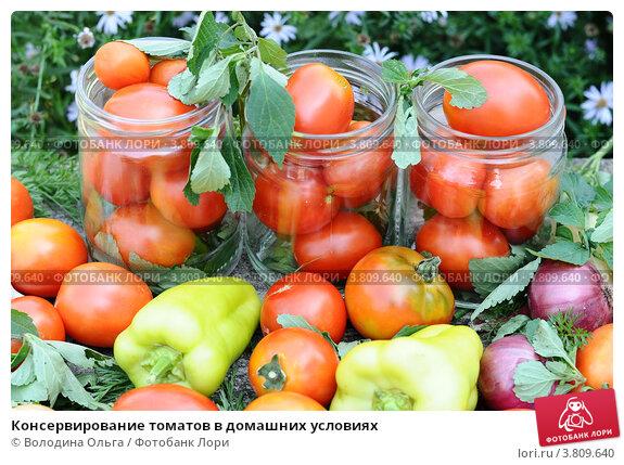 Мариновать помидоры в домашних условиях