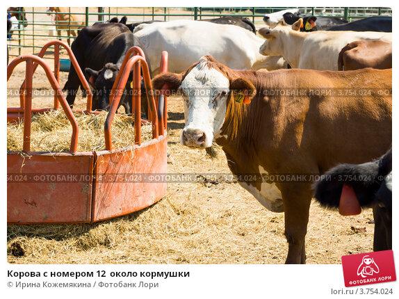 Кормушку для коровы своими руками фото