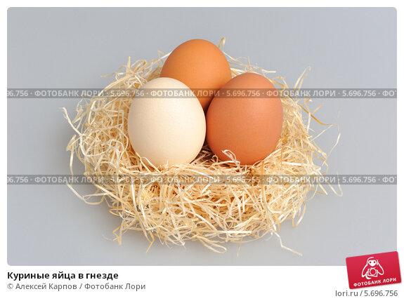 Яйцо в гнезде на белом фоне facebook