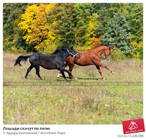 Лошадь скачет во сне