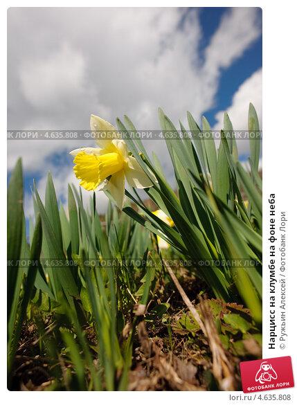 Цветок, небо, растение, природа, флора, фитотерапия, лекарственный, лечебный, целебный, сад