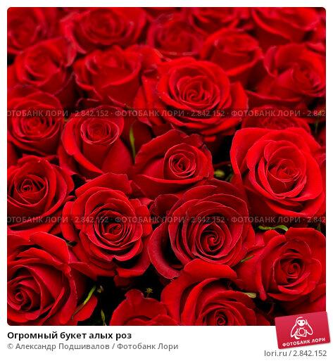 Огромный букет алых роз фото № 2842152