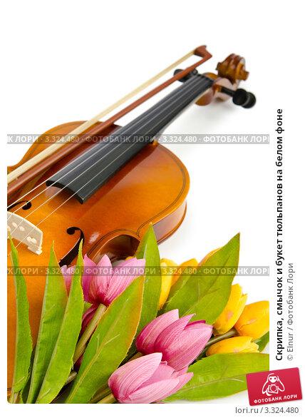 Скрипка, смычок и букет <b>тюльпанов</b> на белом фоне. Купить ...