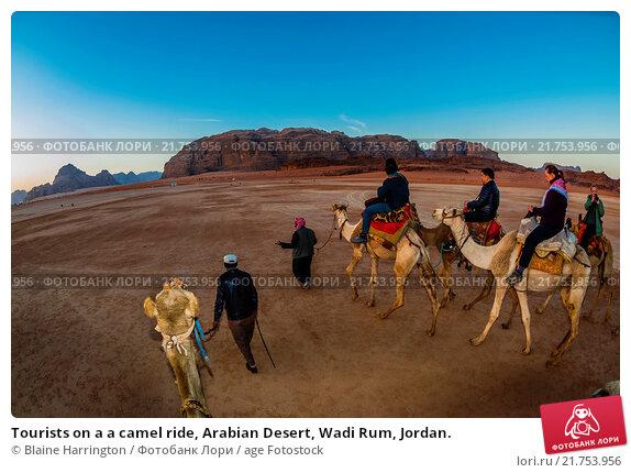 essay on a camel ride