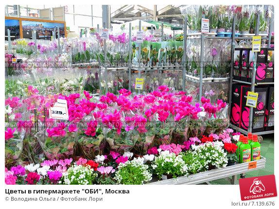 Цветы в горшке в оби каталог