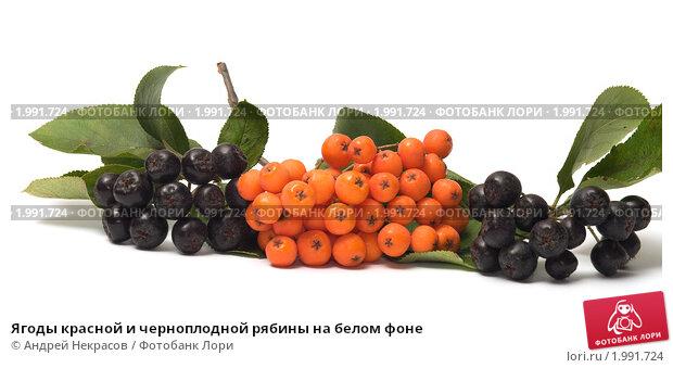 Новые сверхранние сорта винограда