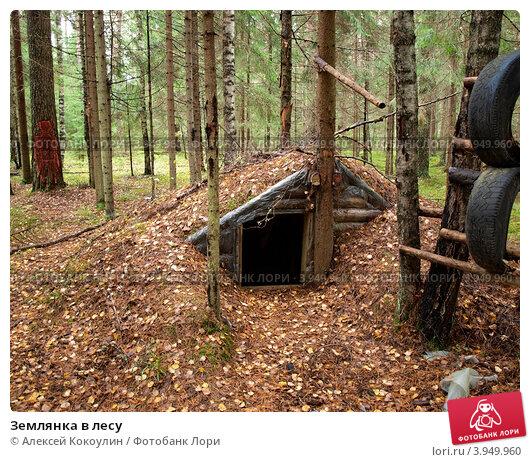 Землянки в лесу  фото