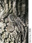 Купить «Фактура коры ясеня», эксклюзивное фото № 308, снято 15 мая 2005 г. (c) Ирина Терентьева / Фотобанк Лори
