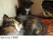 Купить «Кошка с котенком», фото № 660, снято 2 июня 2005 г. (c) Юлия Яковлева / Фотобанк Лори