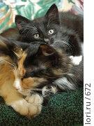 Купить «Кошка с котенком», фото № 672, снято 28 июня 2005 г. (c) Юлия Яковлева / Фотобанк Лори