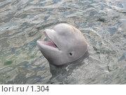 Купить «Веселый дельфин», фото № 1304, снято 15 сентября 2005 г. (c) Ирина Терентьева / Фотобанк Лори