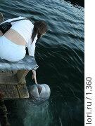 Купить «Как хочется потрогать дельфина!», эксклюзивное фото № 1360, снято 15 сентября 2005 г. (c) Ирина Терентьева / Фотобанк Лори