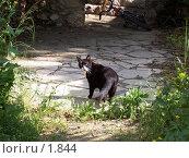 Купить «Кот оглянулся», фото № 1844, снято 11 марта 2006 г. (c) Олег Хмельниц / Фотобанк Лори
