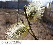 Купить «Верба», фото № 2848, снято 1 мая 2006 г. (c) Маргарита Лир / Фотобанк Лори