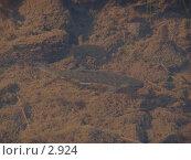 Купить «Рыба в реке», фото № 2924, снято 14 августа 2005 г. (c) Николай Гернет / Фотобанк Лори