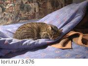Купить «Спящая кошка», фото № 3676, снято 13 мая 2006 г. (c) Юлия Яковлева / Фотобанк Лори