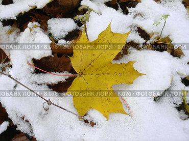 Купить «Начало зимы. Первый снег. Желтый кленовый листок лежит в одиночестве на снегу», фото № 8076, снято 28 октября 2005 г. (c) Петрова Ольга / Фотобанк Лори
