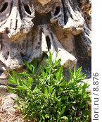 Купить «Колючая трава у обломка колонны. Эфес, Турция», фото № 8876, снято 24 сентября 2018 г. (c) Маргарита Лир / Фотобанк Лори