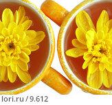 Купить «Две чашки с напитком и хризантемами на белом, изолированные», фото № 9612, снято 29 июня 2006 г. (c) Ольга Красавина / Фотобанк Лори