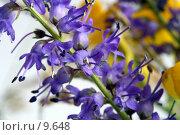 Купить «Сиреневый полевой цветок (дельфиниум)», фото № 9648, снято 24 июля 2006 г. (c) Ольга Красавина / Фотобанк Лори