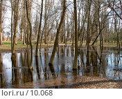 Купить «Деревья в парке, затопленные после дождя», фото № 10068, снято 22 сентября 2018 г. (c) SummeRain / Фотобанк Лори