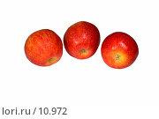 Купить «Яблоки на белом фоне. Садоводство», фото № 10972, снято 11 октября 2006 г. (c) Угоренков Александр / Фотобанк Лори