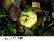 Купить «Яблоко в траве», фото № 11440, снято 22 октября 2006 г. (c) Юлия Перова / Фотобанк Лори
