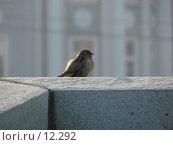 Купить «Воробей сидящий на Лужковом мосту», фото № 12292, снято 24 сентября 2006 г. (c) Roki / Фотобанк Лори
