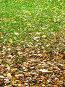 Листва, фото № 12636, снято 18 октября 2006 г. (c) Roki / Фотобанк Лори