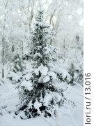 Купить «Зимний пейзаж, ель под снегом после снежного бурана», фото № 13016, снято 5 ноября 2006 г. (c) Ольга Красавина / Фотобанк Лори
