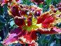 Тюльпан, фото № 13160, снято 28 июня 2017 г. (c) Удодов Алексей / Фотобанк Лори