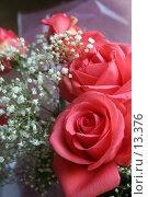 Купить «Праздничный букет роз», фото № 13376, снято 29 октября 2005 г. (c) Захаров Владимир / Фотобанк Лори