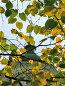 Сквозь осенние листья виден крест храма, фото № 13420, снято 28 сентября 2006 г. (c) Алексей Хромушин / Фотобанк Лори