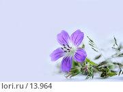 Купить «Герань лесная и травы на светлом фоне», фото № 13964, снято 1 июля 2006 г. (c) Ольга Красавина / Фотобанк Лори