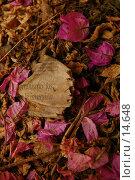 Купить «Клочок старой газеты, засыпанный цветами и листьями», фото № 14648, снято 18 июня 2006 г. (c) Старкова Ольга / Фотобанк Лори