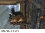Купить «Белка», фото № 14696, снято 21 августа 2005 г. (c) Лисовская Наталья / Фотобанк Лори