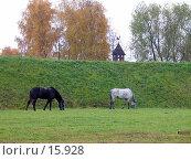 Купить «Две лошади пасутся на зеленой лужайке», фото № 15928, снято 22 октября 2004 г. (c) Юрий Синицын / Фотобанк Лори