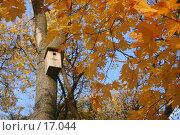 Купить «Золотая осень», фото № 17044, снято 30 сентября 2005 г. (c) Захаров Владимир / Фотобанк Лори