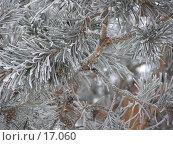 Купить «Иней, обеливший сосновые иголки», фото № 17060, снято 25 января 2007 г. (c) Сергей Ксейдор / Фотобанк Лори