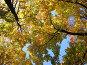 Осень в Коломенском, фото № 18820, снято 1 октября 2005 г. (c) Fro / Фотобанк Лори