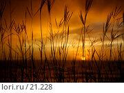 Купить «Травинки и морской закат», фото № 21228, снято 10 марта 2007 г. (c) Eleanor Wilks / Фотобанк Лори